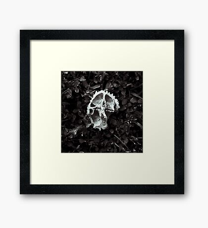Pecan Shell | Bloomington, IN Framed Print