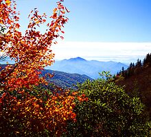 AUTUMN,BLUE RIDGE MOUNTAINS by Chuck Wickham