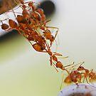 amazing ant bridge by lensbaby