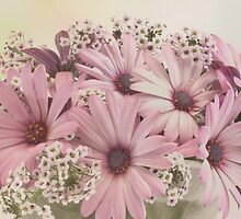 Pink Osteospernum Flowers by Sandra Foster