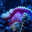 Bubble Tip Anemone by CivicWeapon