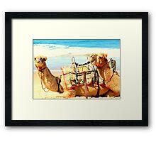 Laughing Camels Framed Print