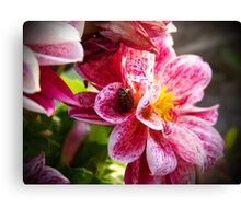 Flowers really do intoxicate me. Canvas Print