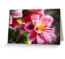 Flowers really do intoxicate me. Greeting Card