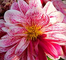 "Flowers whisper ""Beauty!"" to the world by Sunil Bhardwaj"