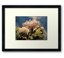 Sunshine, Roses and Morning Happiness (warm tones) Framed Print
