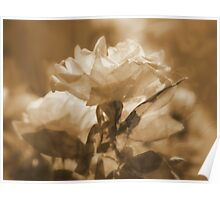 Sunshine, Roses and Morning Happiness (in Sepia) Poster