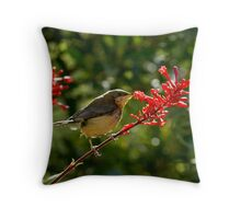 Eastern Spine-bill chick feeding Throw Pillow