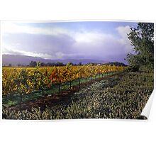 Mumm's Winery  •  Napa, California Poster