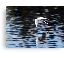 Flying close to the water Canvas Print