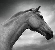 Horse (8-12) by Raymond Kerr