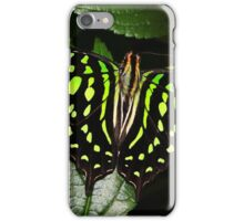 Open Wings Tailed Jay - Graphium agamemnon iPhone Case/Skin