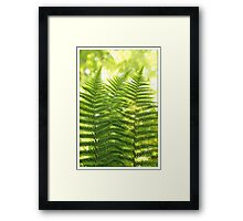 Green Fern Framed Print