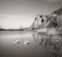 Swan Lake by Steve Silverman