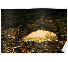 Leaf Floating Down Stream Poster