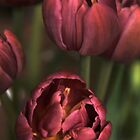 Pink Tulips by Joanne  Bradley