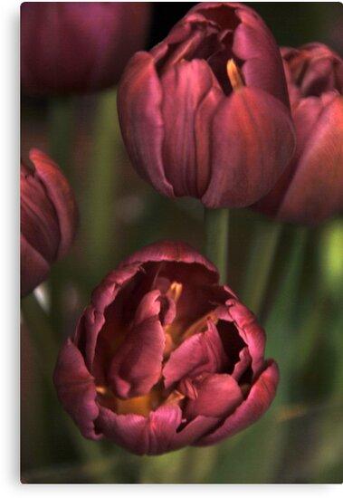 Pink Tulips by Joanne  Bradley