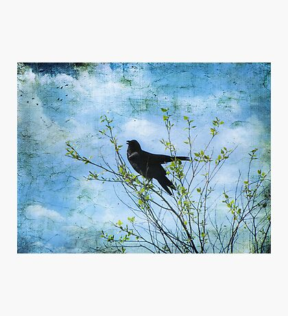 Bird Song Photographic Print