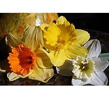 Daffodil Threesome Photographic Print