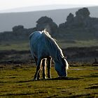Dartmoor by MWhitham