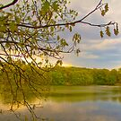 Brady Lake Look by DmitriyM