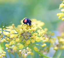 Colourful Ladybird by missmoneypenny