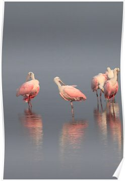 pretty in pink by kathy s gillentine