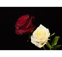 Two Rose Blooms Photographic Print