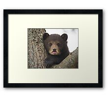 Bear Cub Framed Print