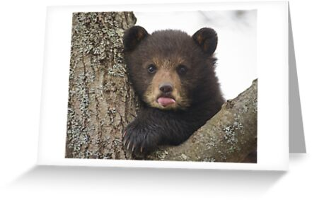 Bear Cub by Daniel  Parent