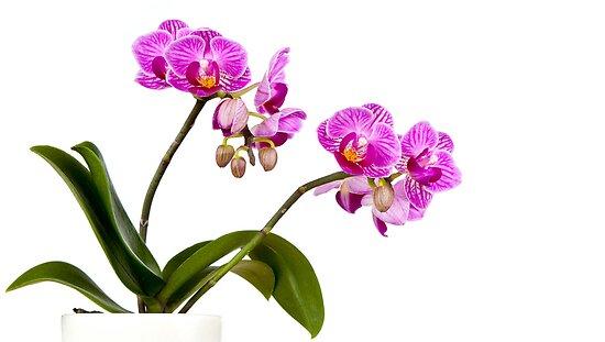 Tropical Blooms by Platslee