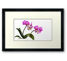 Tropical Blooms Framed Print