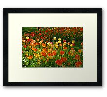 Colours Tulips Framed Print