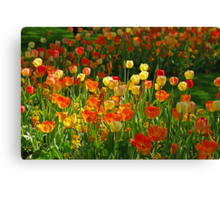 Colours Tulips Canvas Print