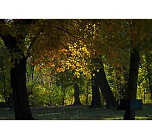 Sun through the trees - Mill Creek Park Photographic Print