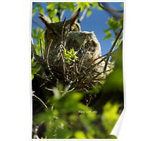 Mom and Fledgling Great Horned Owls Poster