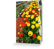 A tulip or two Greeting Card