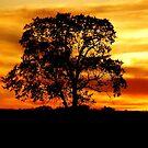 Lone Tree by Mary Carol Story
