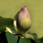 Lotus by SuddenJim