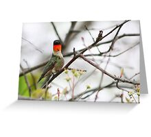 Ruby Hummer Greeting Card
