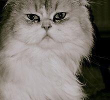"""India"" (Chinchilla Cat) by Lou Wilson"