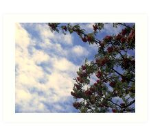 Red Berries and Cloudy Sky Art Print