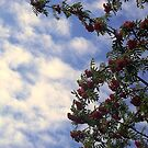 Red Berries and Cloudy Sky by sstarlightss