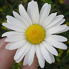 Daisy by Heather Rowe of Oil Water Artt