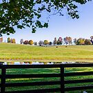 Kentucky Horse Farm by Mary Carol Story