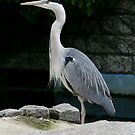 Crafty Heron by Hovis