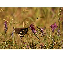 Beautiful Butterfly Wings Photographic Print