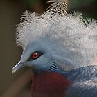 Victoria Growned Pigeon by foppe47
