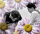 He Loves Me, He Loves Me Not.... by Debbie Pinard