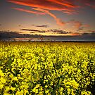 Rapeseed Sunset by Brian Kerr
